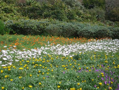 Wildflowers in Cape Town Botanical Gardens