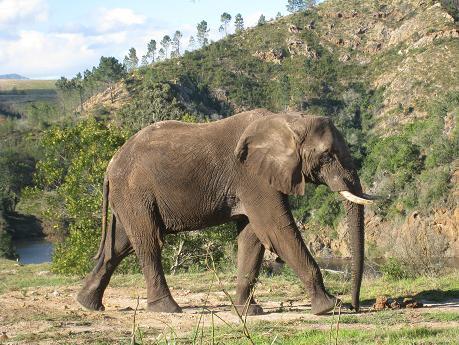 Cape Town Safari Tips Elephant
