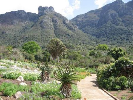 Kirstenbosch cape town botanical gardens for Jardin kirstenbosch