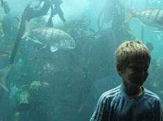 At the kelp forest in Cape Town Aquarium
