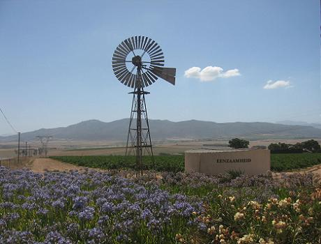 Magic Cape Winelands: Vineyards near Paarl