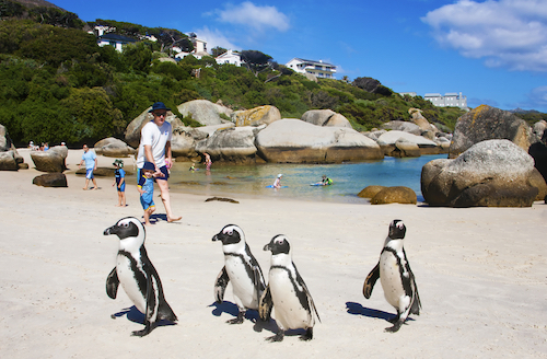 Boulders Beach by Andrea Willmore/Shutterstock.com