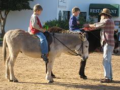 Donkey rides at Imhoff Farm