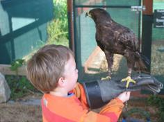 Child holding an eagle at Spier Eagle Encounter