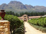Waterford Vineyards in the Stellenbosch Wine Region