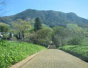 Constantia in the Cape Winelands