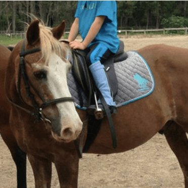 Horse Riding in Cape Town - Houtbay Riding Centre