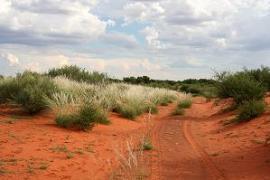 Kalahari Desert by Pieter Roos