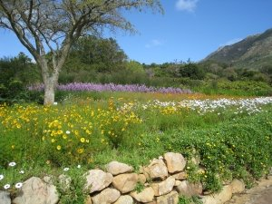 Cape Town Kirstenbosch Gardens in spring